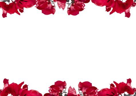 canva background transparent decorated floral borders photos by canva