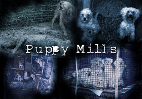whats a puppy mill nys citizens against puppy mills