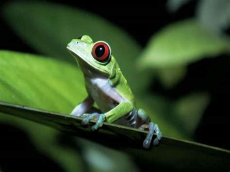 animals and plants that live in the tropical rainforest animals tropical rainforest