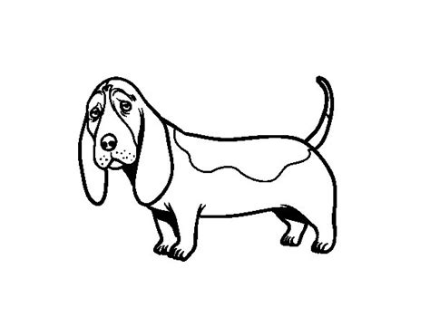 a basset hound coloring page coloringcrew com