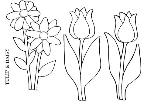 Tulip Coloring Pages For Kids Az Coloring Pages Tulip Coloring Page