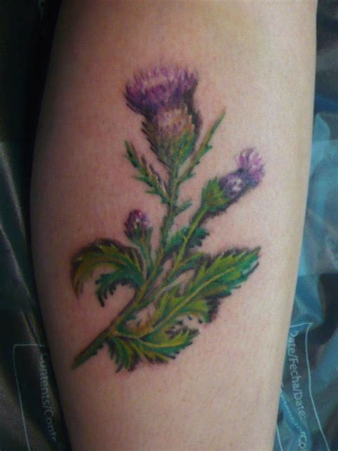 rose and thistle tattoo designs 1000 ideas about thistle on scottish