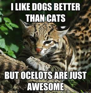 like dogs better than cats but ocelots are just awesome   opinion