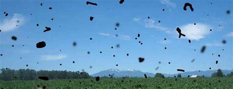 mosche volanti mosche volanti miodesopsie e li di luce oculista a