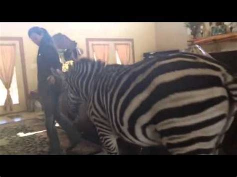 zebra house marty zebra in the house part 1 youtube
