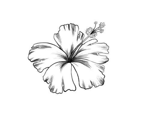 drawing of a flower clipartxtras