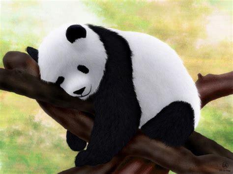 wallpaper panda baby panda wallpapers wallpaper cave