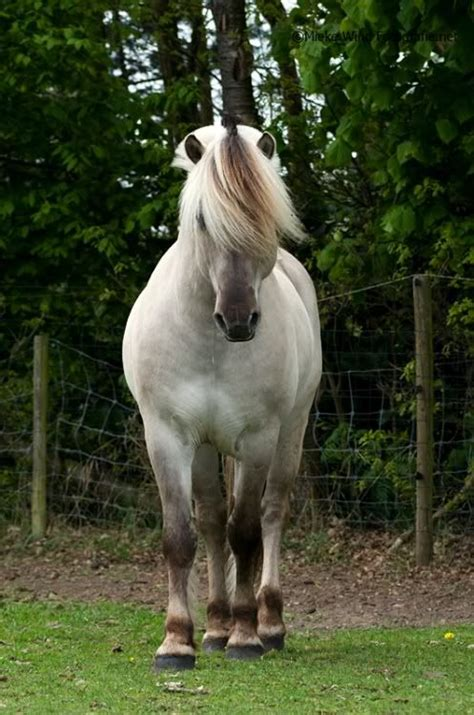 fjord colors 100 best fjord colors images on pinterest fjord horse