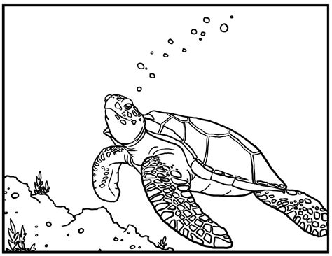 turtle coloring page free printable turtle coloring pages for