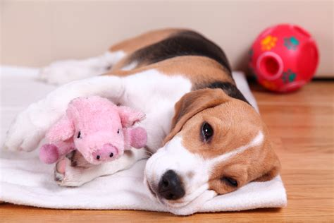 when to put a to sleep is it right to put to sleep pets homevet