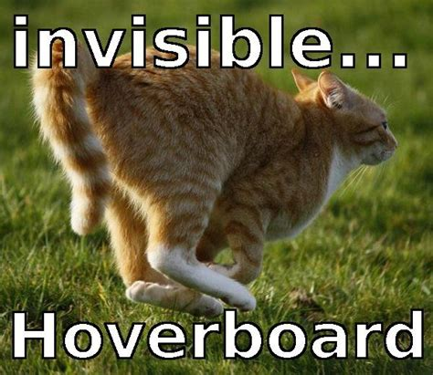 Invisible Cat Meme - 12 best images about animal memes on pinterest cats