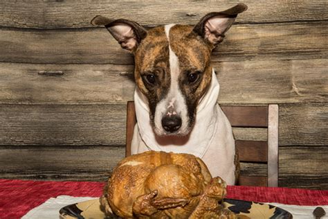 is turkey ok for dogs these 6 foods aren t safe for dogs