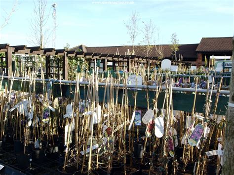 we review the hollybush garden centre