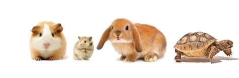 Pets At Home Small Animals Available In Store Small Animals Available For Sale Petland