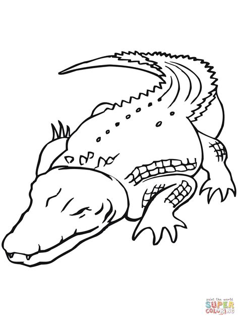coloring book length deltakrokodil fr 229 n australien m 229 larbok gratis