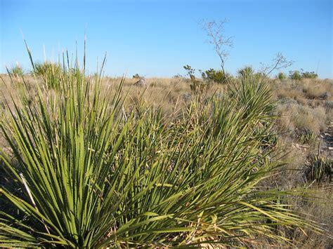 desert plants flowers trees cini clips