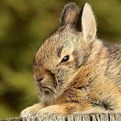 Rabbit Clutch Bunny Clutch 17 best images about disapproving bunnies on