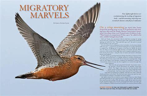 migratory marvels