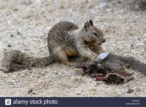 Dead Squirrel Meme - dead squirrel meme 100 images squirrel meme funny