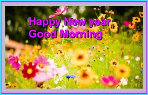 morning new year images morning of new year pictures images page 2