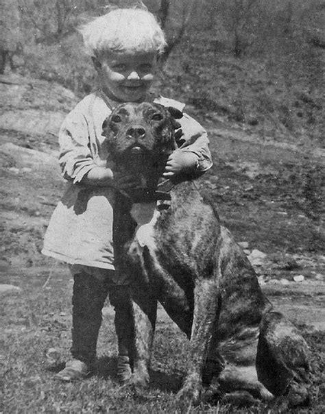 nanny dogs wynning pit kennels pit history