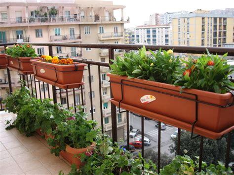 vasi per orto in terrazzo innaffi le piante balcone paghi leccecronaca it