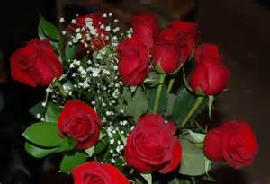 valentine roses full desktop backgrounds