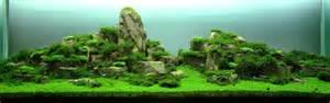 Fish Tank Aquascape All About Betta Fish Planted Aquarium