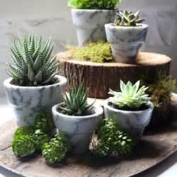 Unique Modern Home Decor Plantas Ornamentales Jard 237 N Natural Ideas Preciosas