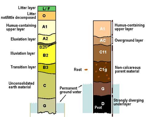 Soil Development Diagram