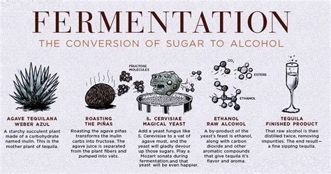 fermentation to distillation steps to make tequila