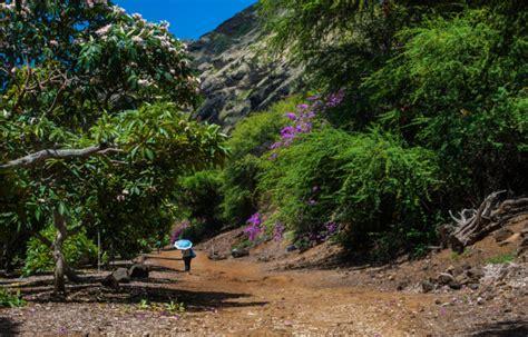 koko crater botanical garden visiting the enchanting koko crater botanical garden