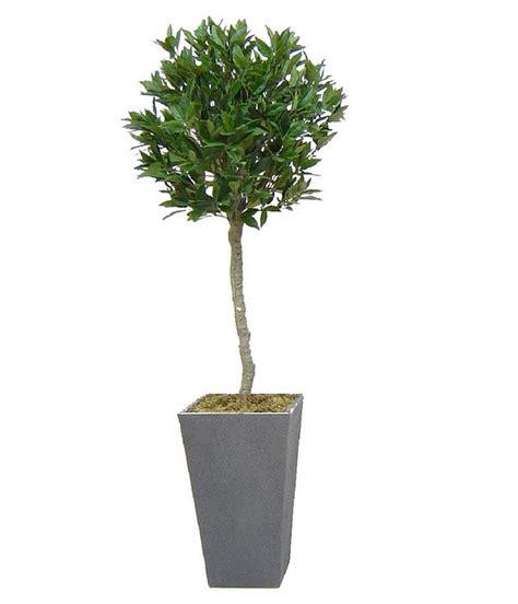 bay laurel topiary artificial bay tree by artificial landscapes