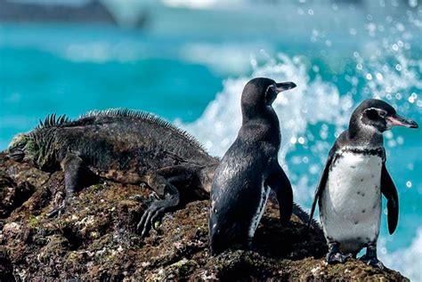 galapagos islands animals galapagos islands animals wildlife bucket list ecuador