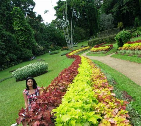 peradeniya botanical gardens ticking the bucketlist 187 peradeniya botanical gardens