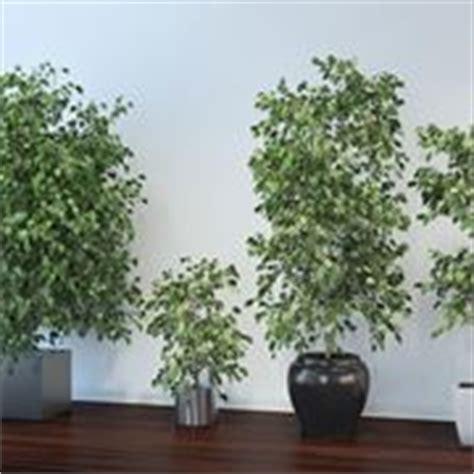 piante da interno resistenti piante da appartamento resistenti piante appartamento
