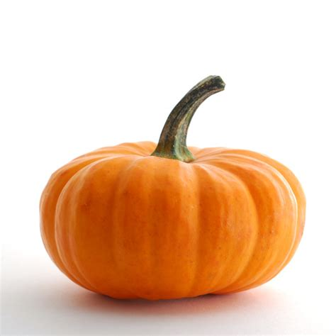 pumpkin of pumpkin a carb dr s