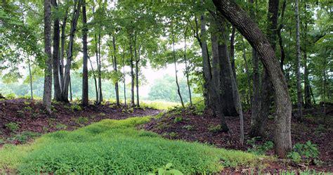 the watercolor workshop woodland landscape part 1 thevirtualinstructor com members