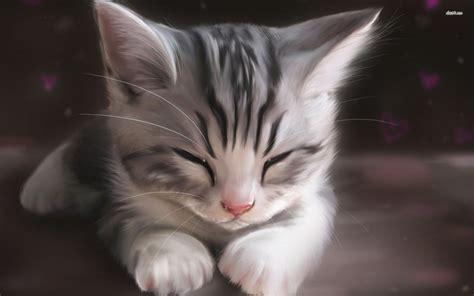 sleepy kitten wallpapers hd   adorable