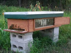 top bar hive with window beekeeping in manitoba