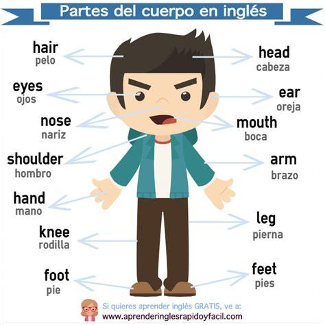 imagenes en ingles de las partes del cuerpo partes del cuerpo