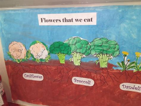 2 vegetables that can be eaten the flowers we and roots on