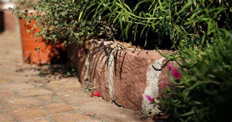 Garten Und Landschaftsbau Pflanze Der Woche by Durmersheim Alba Garten Und Landschaftsbau