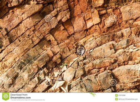bed rock bedrock in the forest royalty free stock photos image 31515288