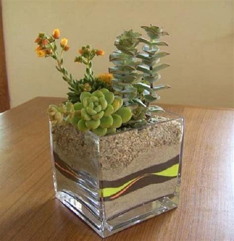 decorar con plantas suculentas 17 mejores ideas sobre plantas de ventana en pinterest