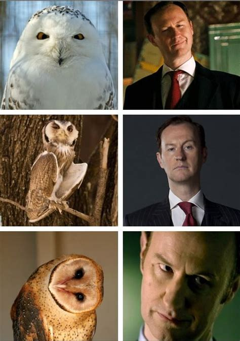 Cumberbatch Otter Meme - 56 best sherlock images on pinterest mycroft holmes benedict cumberbatch and mark gatiss