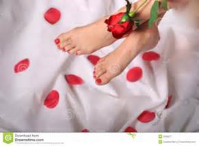 Feet and red rose royalty free stock photography image 2938277