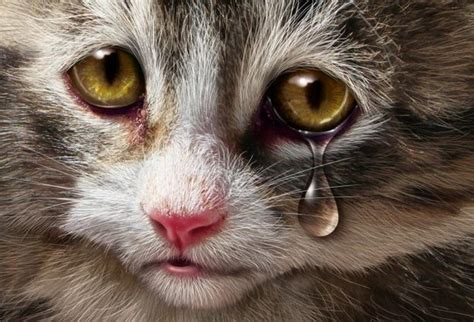 google images kittens sad cute kitten google search image 2144514 by