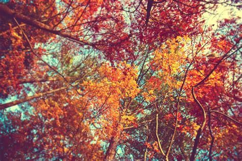 fall break     basis roar