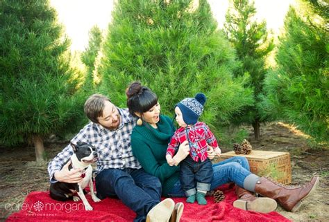 the collins family adorable at the tree farm south